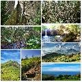 Subic Hiking Activities