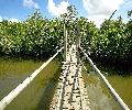 Bamboo Bridge Candijay Bohol