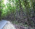 Bilar Forest Bohol