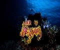 Kirbys Rock-Anemone and Reef