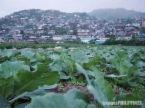 MOUNTAIN CITY AND FARM